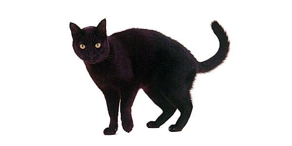 Wedding Superstitions Black Cat
