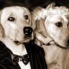 3 maneiras de incluir o seu cachorro no seu casamento